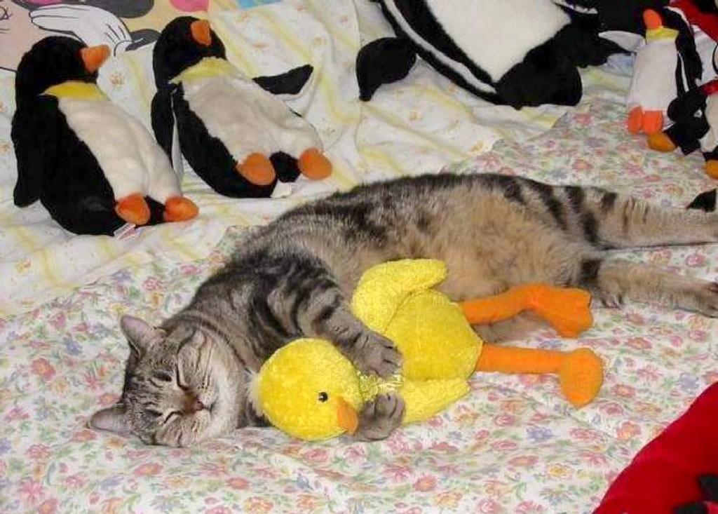 Mon canard !