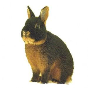 Personnellement, je préfère nettement le lapin farci de thym et de carottes !
